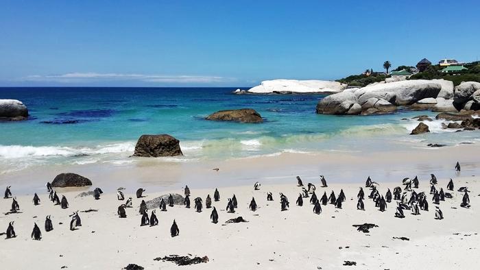 singles viajeros esencia de sudafrica