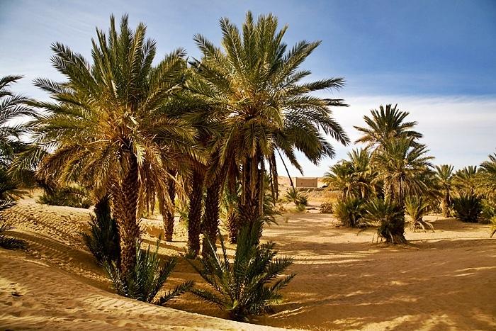 sur marruecos agencia de viajes para solteros