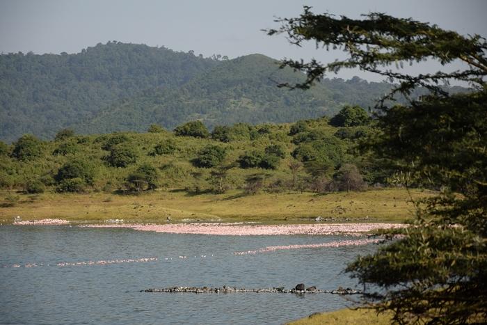 tanzania lago singles