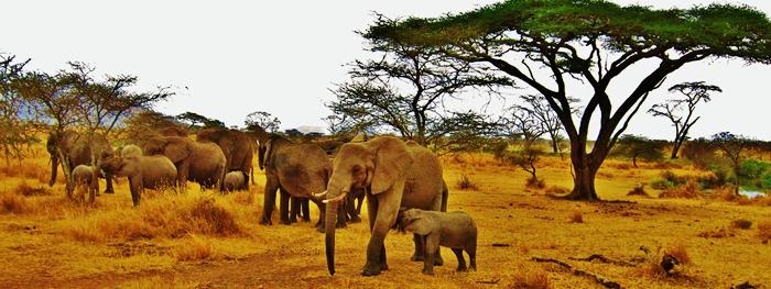 viajes singles kenia zanzibar 01